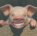 Pigteeth